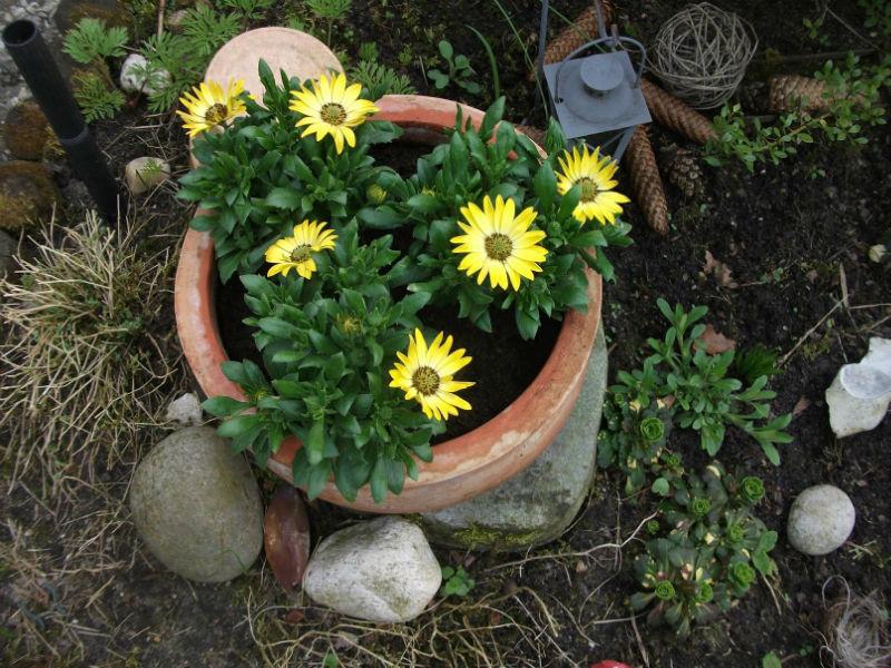 Blumen Deko Ideen April April   Blumendeko Ideen für den Garten