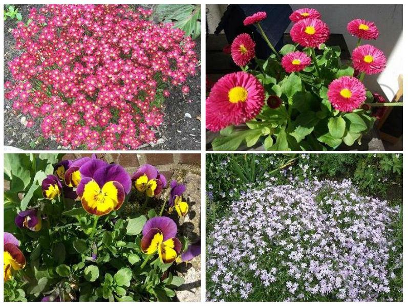 Fruehling Blumen Frühling im Garten