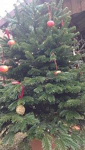 tannenbaum mit vogelfutter 171x300 Schöne Adventszeit und Weihnachten