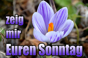 toller sonntag Toller Sonntag – ein echter Sonntag #8 – Link Party
