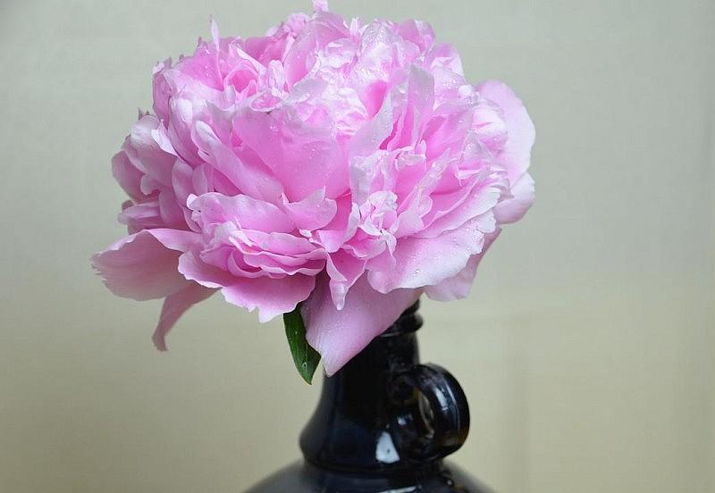 pfingstrose in der vase 800x552 Engel Tasse