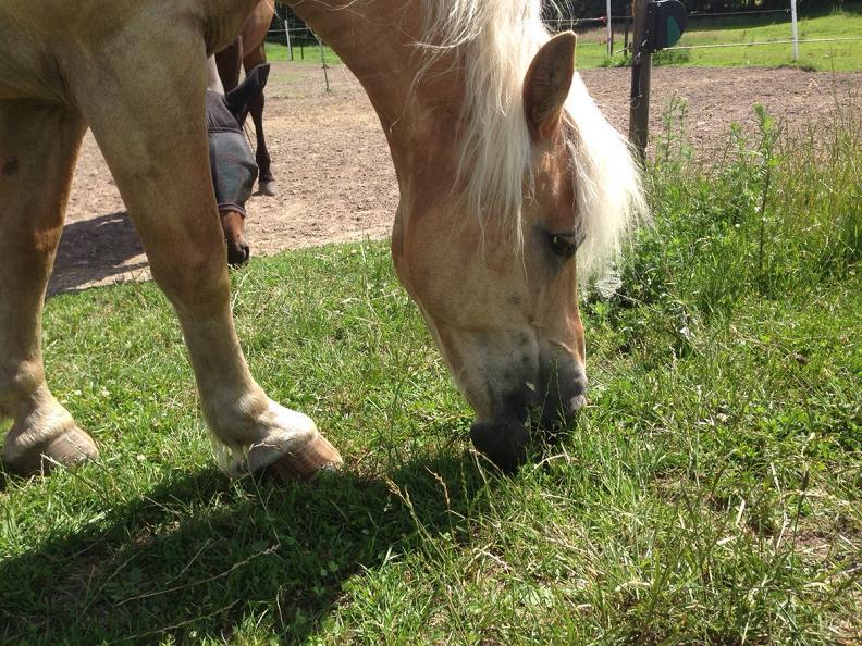 pony b Toller Sonntag – ein echter Sonntag #17