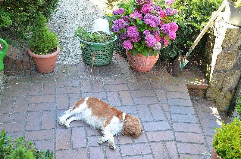 hund bei der arbeit 800x530 Toller Sonntag – ein echter Sonntag # 23