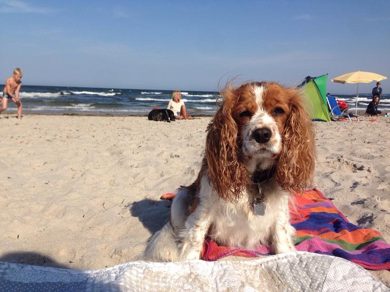 hunde strand ostsee Toller Sonntag – ein echter Sonntag # 23
