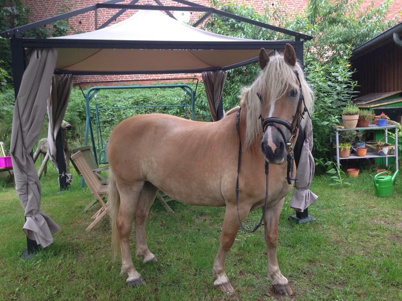 pferd im garten Toller Sonntag – ein echter Sonntag # 24