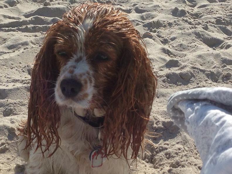 scharbeutz hunde strand Toller Sonntag – ein echter Sonntag # 23