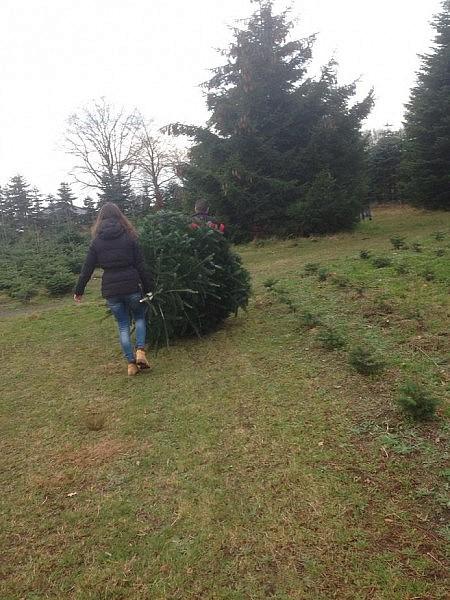 tannenbaum schlagen 1 450x600 Toller Sonntag – ein echter Sonntag # 31