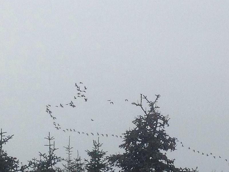 vogel fliegen 800x600 Toller Sonntag – ein echter Sonntag # 31