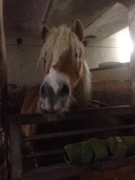 pony im stall 450x600 Toller Sonntag – ein echter Sonntag # 33