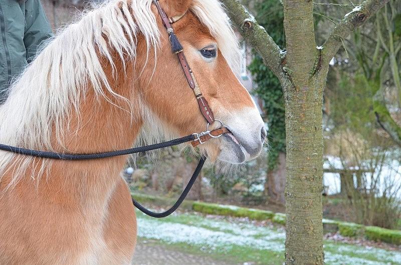 pony spazieren 800x530 Toller Sonntag – ein echter Sonntag # 35
