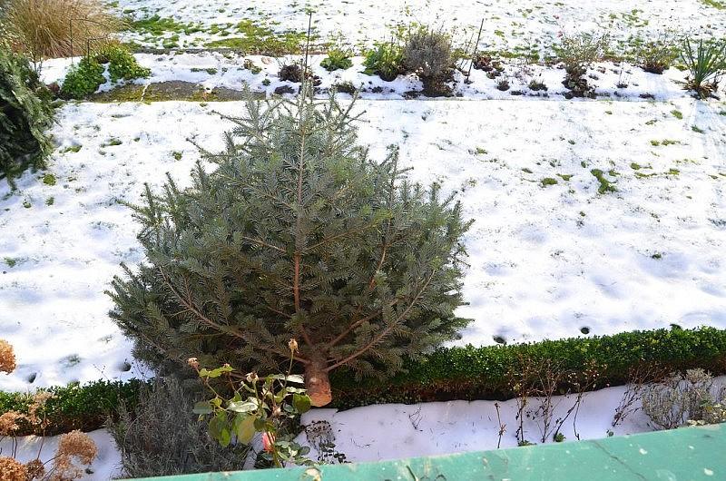 tannenbaum raus 800x530 Toller Sonntag – ein echter Sonntag # 34