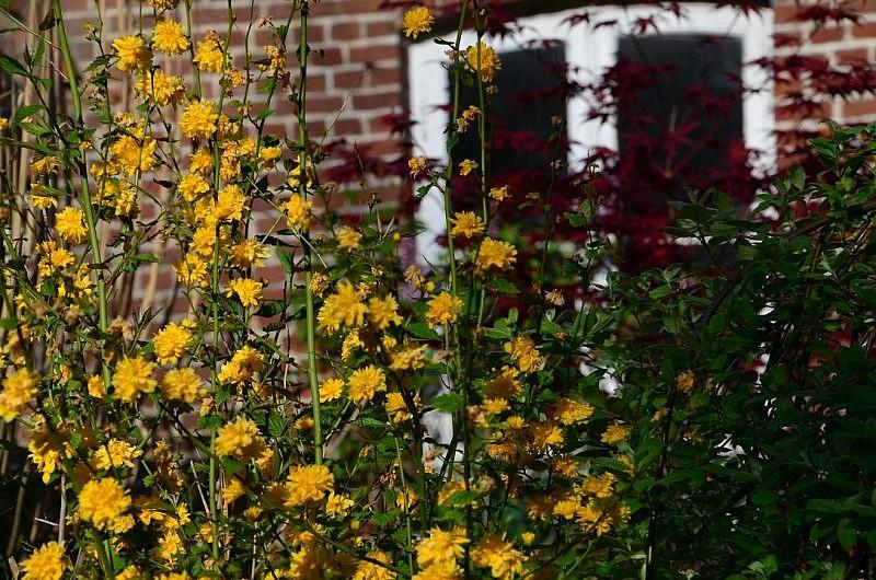 gelbe blumen 800x530 Toller Sonntag – ein echter Sonntag # 52