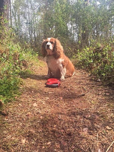 spaziergang mit hund 450x600 Toller Sonntag – ein echter Sonntag # 50