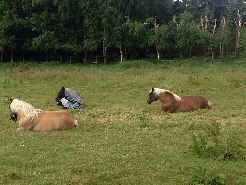 pferde machen pause 800x600 Toller Sonntag – ein echter Sonntag # 56