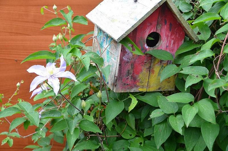 vogelhaus 800x530 Toller Sonntag – ein echter Sonntag # 57